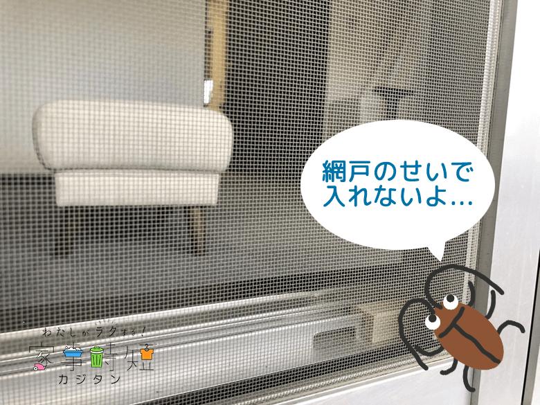網戸にゴキブリ画像
