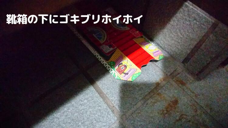 靴箱の下にゴキブリホイホイ