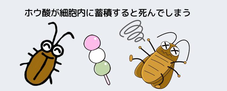 なぜ害虫はホウ酸で死ぬのか?